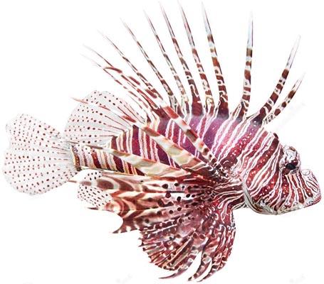 запах рыбы изо рта после еды
