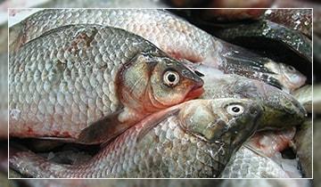 Речная рыба с глистами можно ли есть